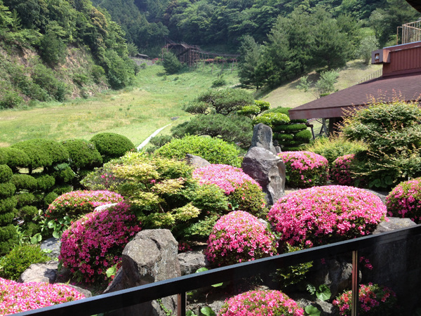 2階庭園ロビーのサツキ