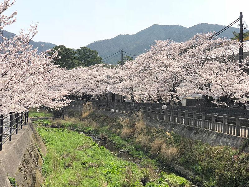 松陰神社のそばを流れる月見川の遊歩道