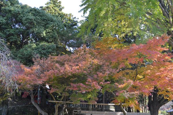 人丸神社 紅葉