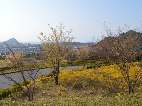 桜-011.jpg