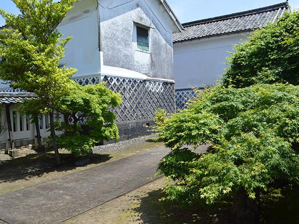 熊谷家住宅中庭新緑の紅葉