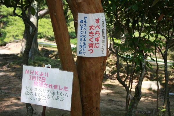 すべらない木