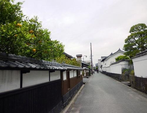白壁や土塀などから夏みかんの黄色い実がのぞく風景