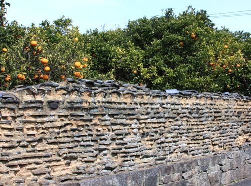 夏みかんと土塀