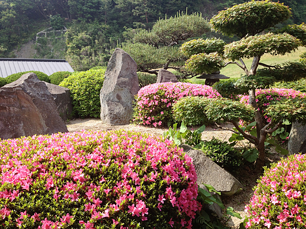 日本庭園のサツキ