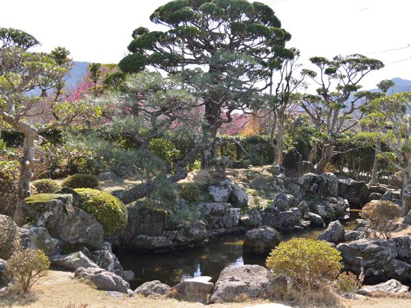 剪定が終わったばかり桂太郎旧宅の日本庭園